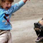 Пятилетняя девочка госпитализирована после встречи с бродячей собакой в Сланцевском районе